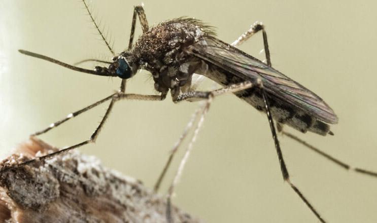 蚊虫入侵迹象