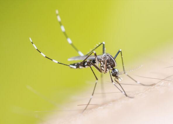 蚊虫叮咬的危害